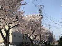 2019卸団地の桜.JPG