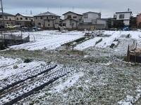 春の雪.JPG