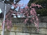 桃ノ木.jpg