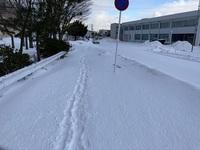 雪道.jpeg